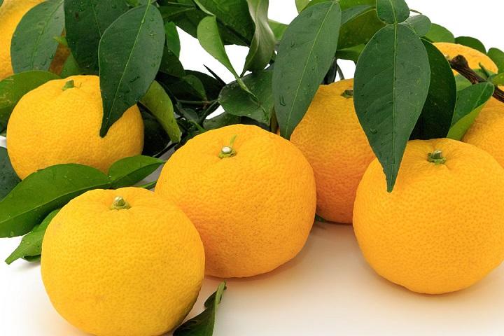特産品國造柚子相關